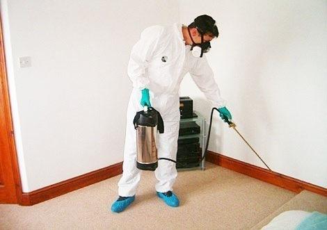كيف تتخلص من الحشرات المنزلية؟